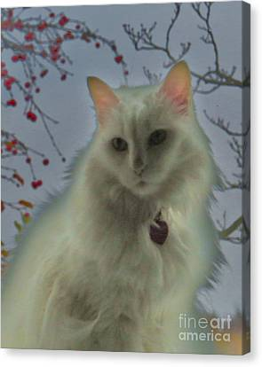 White Cat Dreams Canvas Print by Judy Via-Wolff
