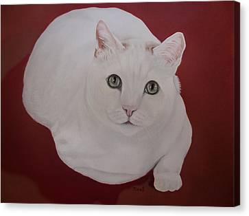 Portraits Of Cats Canvas Print - White Cat by Zina Stromberg