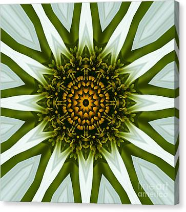 White Coneflower Mandala 12 Canvas Print by Carrie Cranwill
