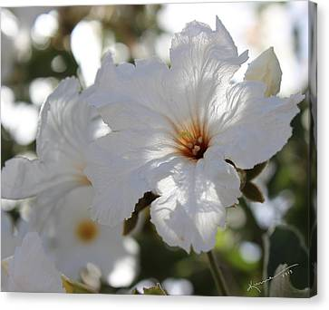 White Cordia Canvas Print by Kume Bryant