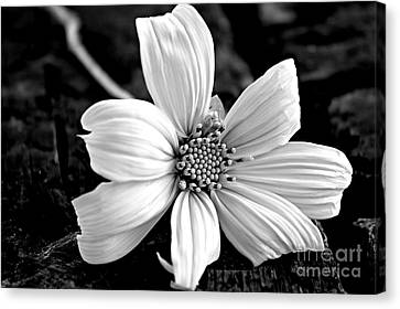 White Cotton Canvas Print by Clare Bevan