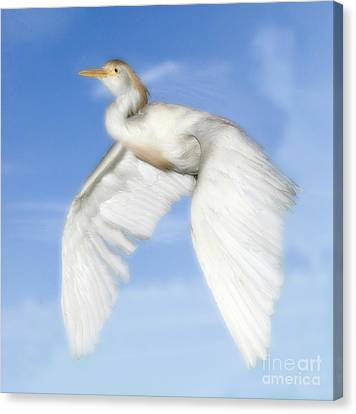 White Crane Canvas Print