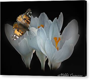 White Crocus With Monarch Butterfly Canvas Print by Mikki Cucuzzo