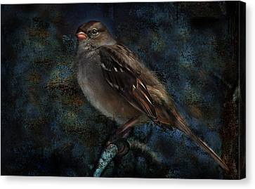 Canvas Print featuring the photograph White-crowned Sparrow by Barbara Manis