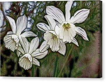 White Daffodil Flowers Canvas Print by Photographic Art by Russel Ray Photos