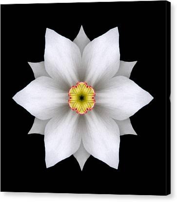 White Daffodil II Flower Mandala Canvas Print by David J Bookbinder