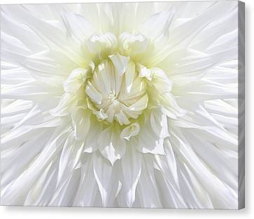 White Dahlia Floral Delight Canvas Print by Jennie Marie Schell