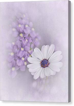White Daisy Canvas Print by David and Carol Kelly