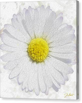 White Daisy On White Canvas Print by Jon Neidert