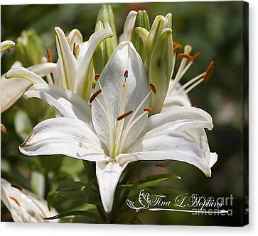 White Day Lily 20120615_36a Canvas Print
