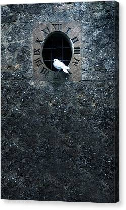 Old Wall Canvas Print - White Dove by Joana Kruse
