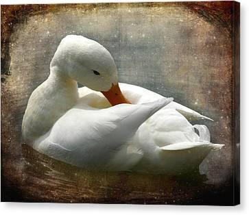 White Duck Canvas Print by Barbara Orenya