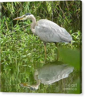 Canvas Print featuring the photograph White Egret Double  by Susan Garren