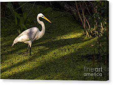 White Egret Canvas Print by Marvin Spates