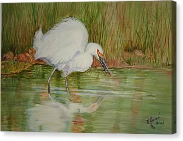 White Egret Wading  Canvas Print