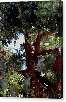 White Eucalyptus 2 Canvas Print