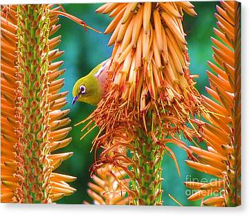 White-eye On Deer-horn Canvas Print