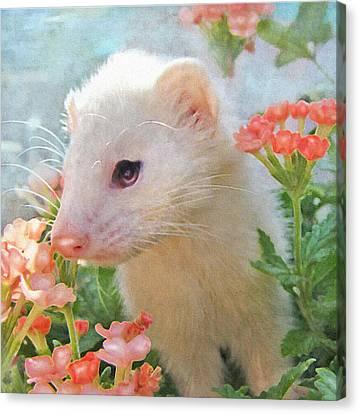 Ferret Canvas Print - White Ferret by Jane Schnetlage