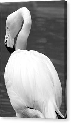 White Flamingo Canvas Print by Jp Grace