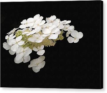 White Floral Canvas Canvas Print
