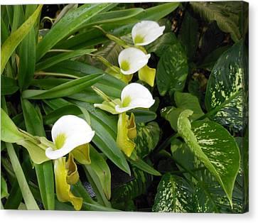 White Flower Array Canvas Print