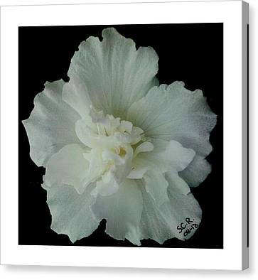 White Flower By Saribelle Rodriguez Canvas Print by Saribelle Rodriguez