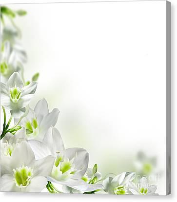 White Flower Frames Canvas Print