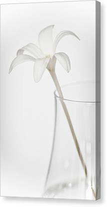 Canvas Print featuring the photograph White Flower In A Vase by Zoe Ferrie