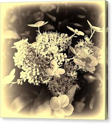 white flower SV Canvas Print by Leif Sohlman
