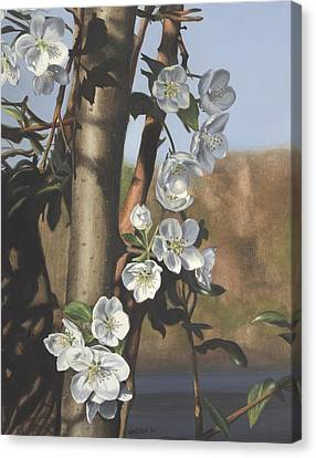 White Flowers Canvas Print by Michele Renee