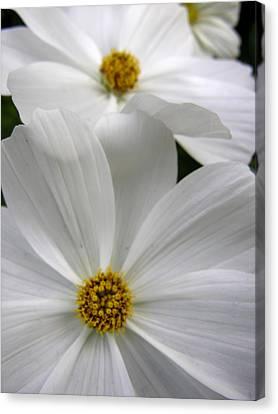 Canvas Print - White Flowers by Robert Lozen