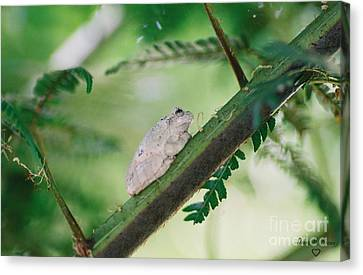 Canvas Print featuring the photograph White Frog by Donna Brown