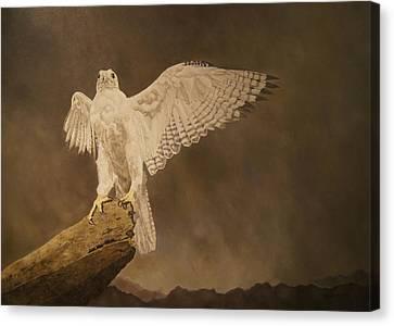 White Gyrfalcon... Canvas Print