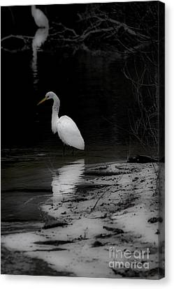 White Heron Canvas Print by Angela DeFrias