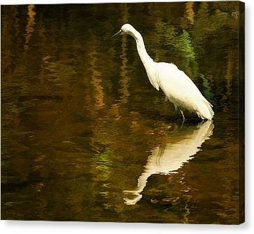White Heron Canvas Print by Dick Wood