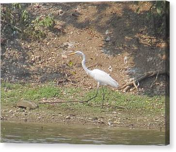 Canvas Print featuring the photograph White Heron by Eric Switzer
