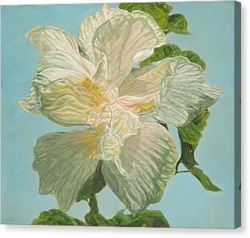 White Hibiscus Canvas Print by Michael Allen Wolfe