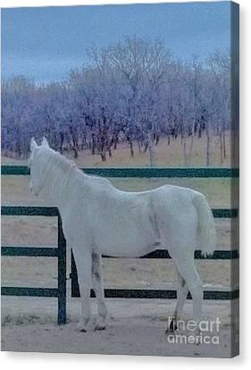 White Horse At Dusk Canvas Print