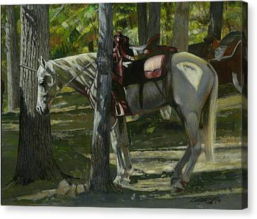 Trail Ride Canvas Print - White Horse Tied by Don  Langeneckert