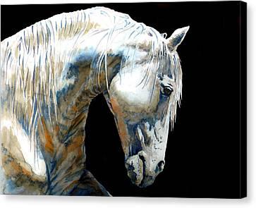 White Horse In Black Canvas Print by J- J- Espinoza