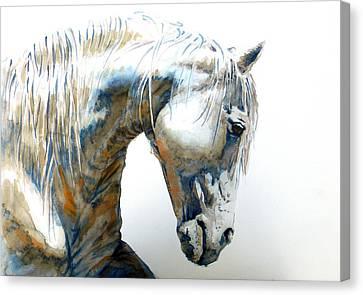 White Horse Canvas Print by J- J- Espinoza