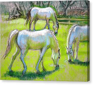 Canvas Print featuring the painting White Horses Grazing by Sue Halstenberg