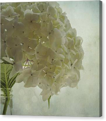 Canvas Print featuring the photograph White Hydrangea by Sally Banfill