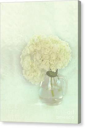 White Hydrangeas Canvas Print by Kay Pickens