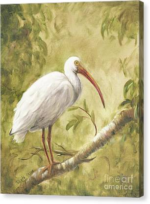 White Ibis Canvas Print