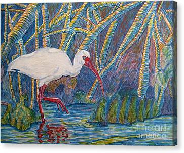 Canvas Print featuring the painting White Ibis In The Mangroves by Judy Via-Wolff