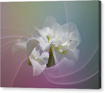 Canvas Print featuring the photograph White Iris by Judy  Johnson