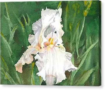 White Iris Canvas Print by Spencer Meagher