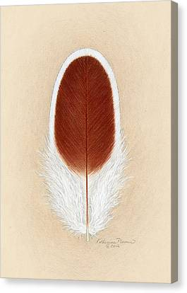 White Laced Red Cornish Feather Canvas Print