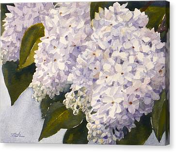 White Lilacs Canvas Print